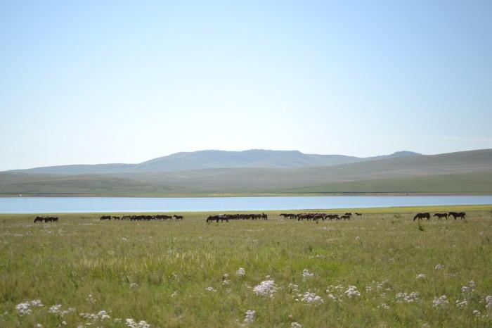 На берегу Красноярского водохранилища